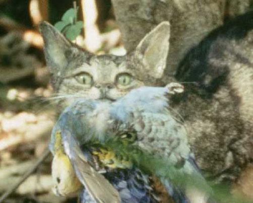 feral-cat-home